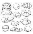 potato sketch set agriculture and nature image vector image vector image