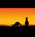 art kangaroo beauty scenery vector image vector image