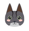 isolated cute cat icon vector image