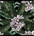 seamless pattern with plumeria flowers vector image vector image
