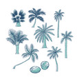 set of palm different kinds of tropical vector image
