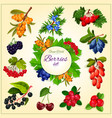 wild berries and fruits set poster vector image vector image