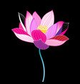 magnificent of a beautiful lotus vector image