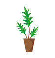 nature plant with leaves inside flowerpot vector image vector image