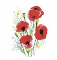 Red watercolor poppies flowers isolated on white vector image vector image