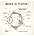 structure of the human eye vector image vector image