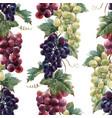 watercolor grape pattern vector image