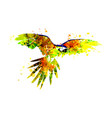 a flying parrot ara vector image vector image