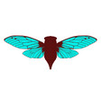 beautiful cicada vector image vector image