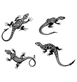 Black lizards isolated on white background vector image vector image