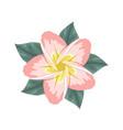 pink plumeria flower design decoration flowers vector image