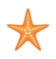 Sea star vector image
