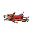 superhero dog flying vector image