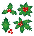 holly leaves with berries vector image vector image