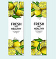 lemon banner drawing citrus fruit frame vector image