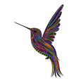 original color hummingbird vector image