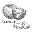 coconut set hand drawn sketch vector image vector image