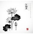 Lotus flowers hand drawn with ink vector image