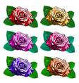 beautiful set of different roses hand-drawn vector image vector image