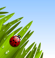 Ladybug on grass vector image vector image