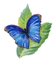 Watercolor blue butterfly on green leaves vector image vector image