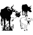 cow collection isolated on white background vector image vector image