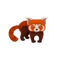 cute chinese red panda wild animal vector image