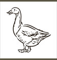 hand drawn goose simple sketch vector image