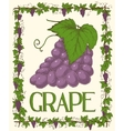 Grape and Leaves vector image
