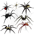 Spider set vector image vector image