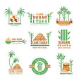 sugarcane manufacturing sweets plants production vector image vector image