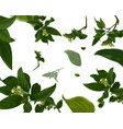 vivid branch with fresh green leaves summer or vector image vector image