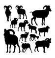 big european moufflon animal silhouettes vector image
