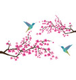 cherry blossom with hummingbirds vector image vector image