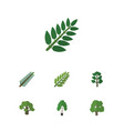 flat icon nature set of acacia leaf timber tree vector image vector image