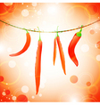 hot peppers vector image