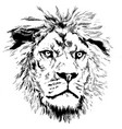 lion with little mane vector image vector image