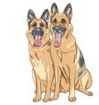 two dog German shepherd breed vector image vector image
