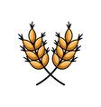wheat leaves isolated icon vector image