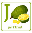 an alphabet with cute fruits letter j jackfruit vector image vector image