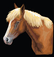 colorful horse portrait-8 vector image
