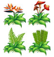 four different types of plants on white background vector image vector image