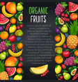 fruits and berryes design page vector image