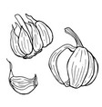 linear set garlic line art white background vector image vector image