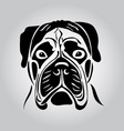 portrait of a bullmastiff vector image