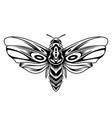 beautiful butterfly vintage concept vector image vector image
