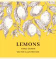 lemons hand drawn sketch poster template vector image vector image