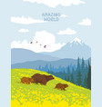 bears nature mountains