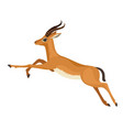 gazelle or antelope with horn running in wildlife vector image