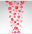 a lot of falling red rose petals on transparent vector image vector image